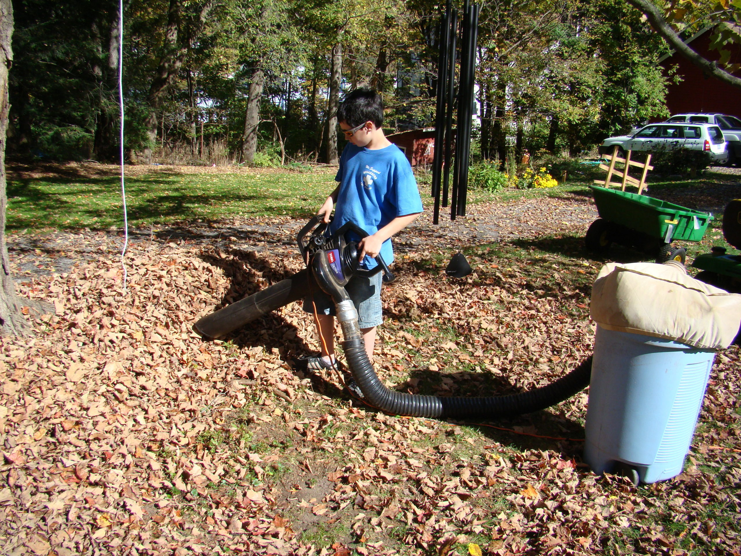 With leaves all blown to a central spot, this young man uses an electric blower/shredder to vacuum up the collected leaves. A blade inside the blower shreds the leaves and pushes the leaves through a tube into a bag and large plastic drum. The shredded leaves can then be added to compost or used as garden mulch.