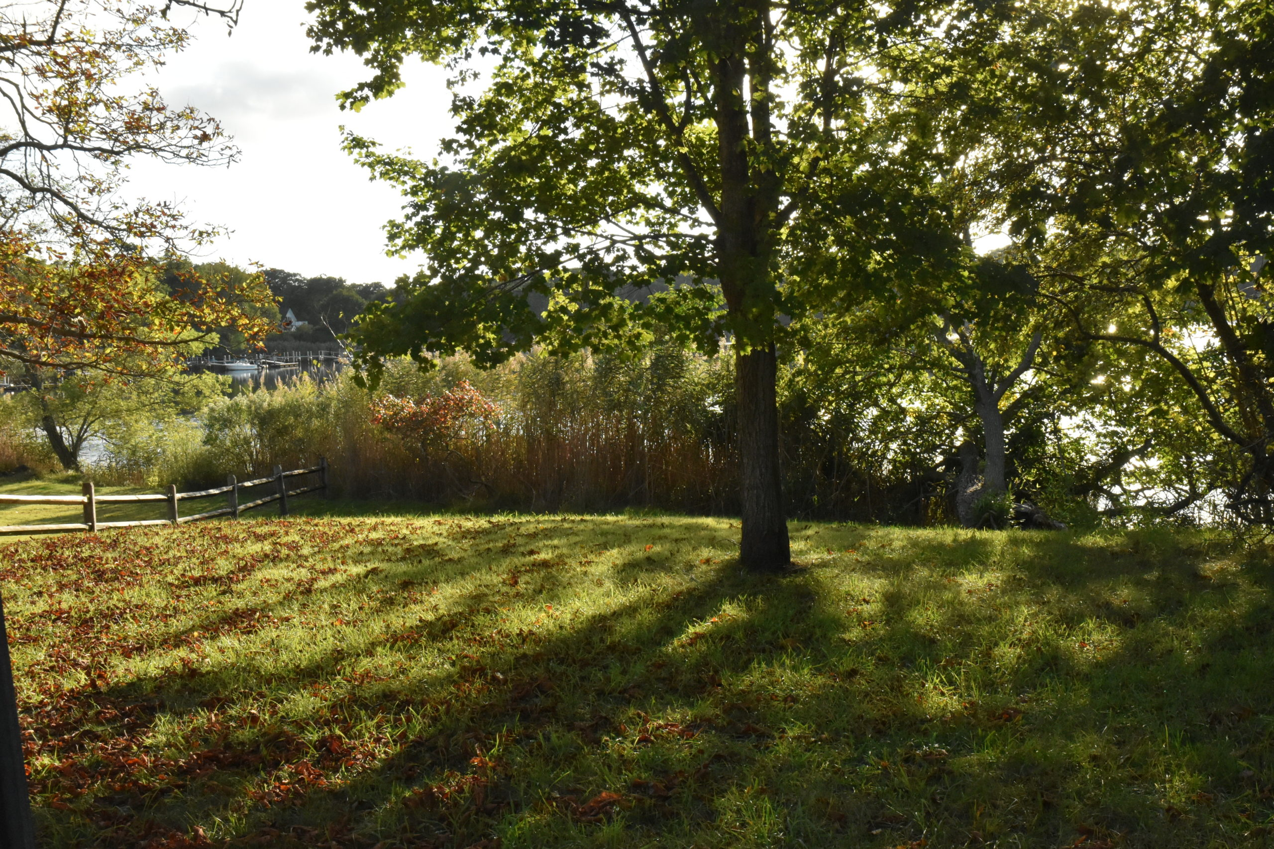 The owner of a house at the end of Green Street in Sag Harbor has offered to clear phragmites from this village-owned parcel that will effectively provide public access to the Upper Cove. STEPHEN J. KOTZ