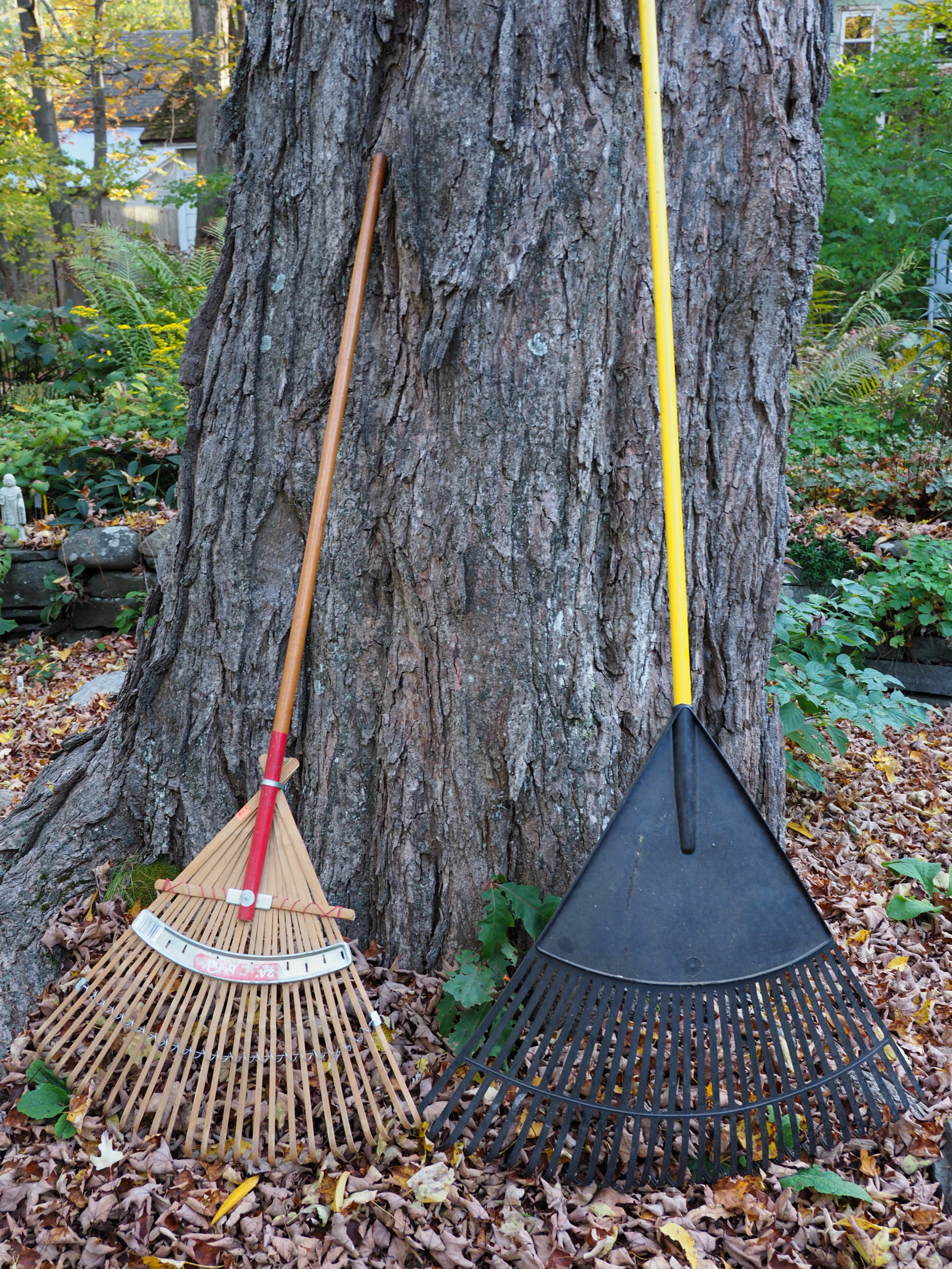 The rake on the left is a wooden tine leaf or lawn rake. The one on the right is a much wider plastic rake. Metal lawn rakes look similar to the wooden one but tend to be heavier. Remember, the wider the rake, the more weight you have to pull when raking the leaves.