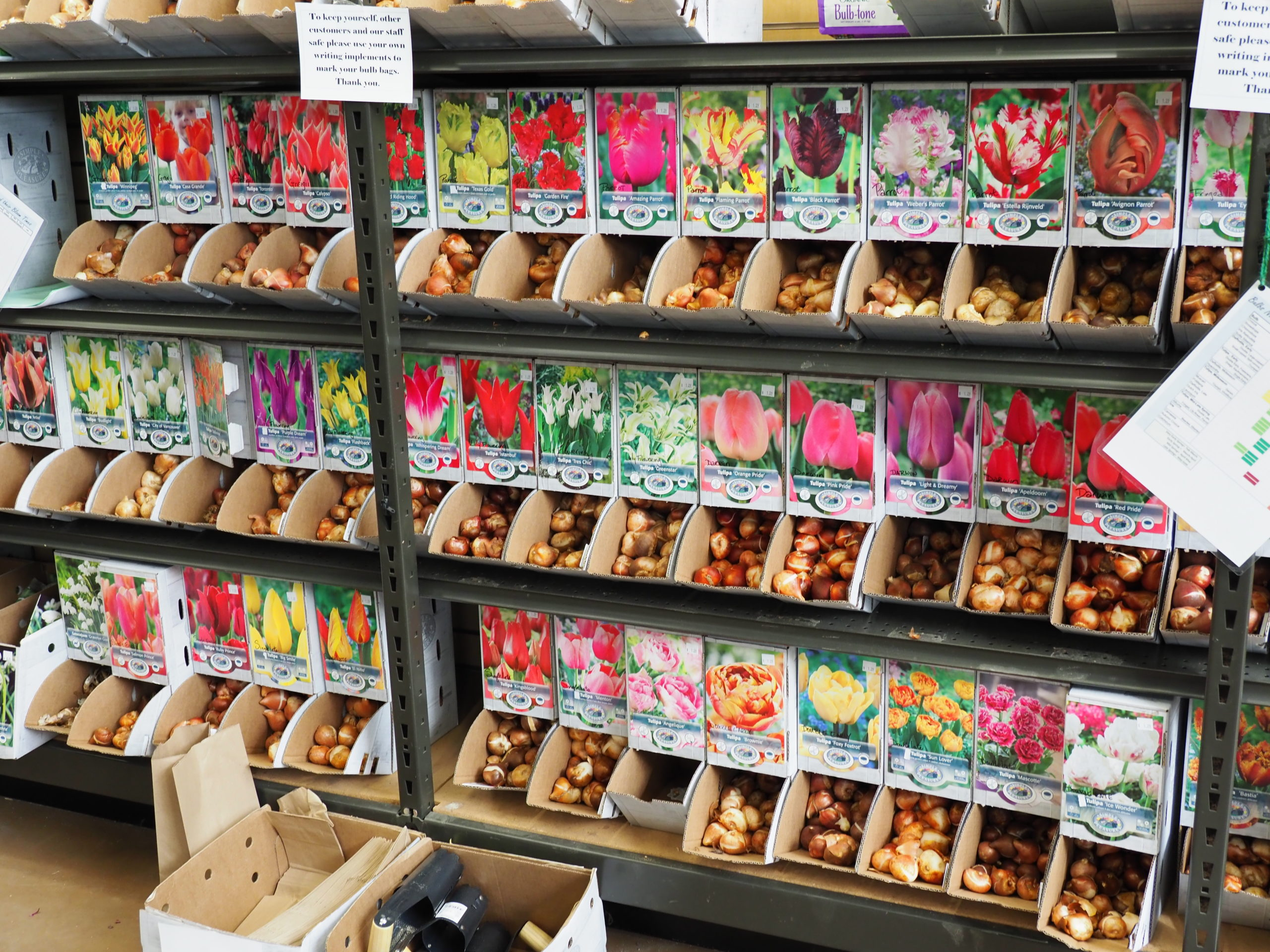 """When shopping for bulbs locally, look for these types of """"bulk"""" bins where you can buy individual bulbs or dozens of them. Remember to put each variety in a separate labeled bag."""