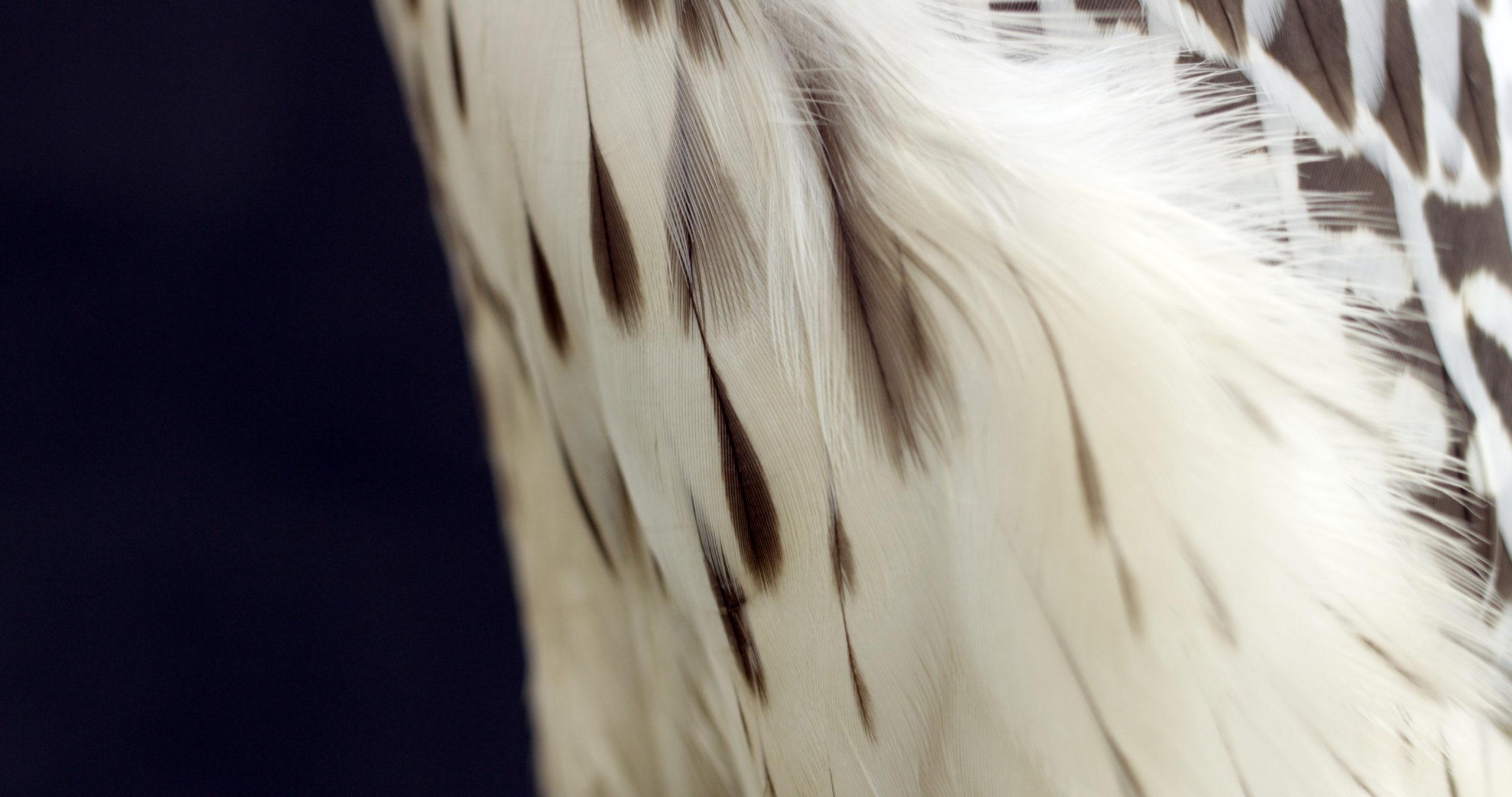 A falcon in