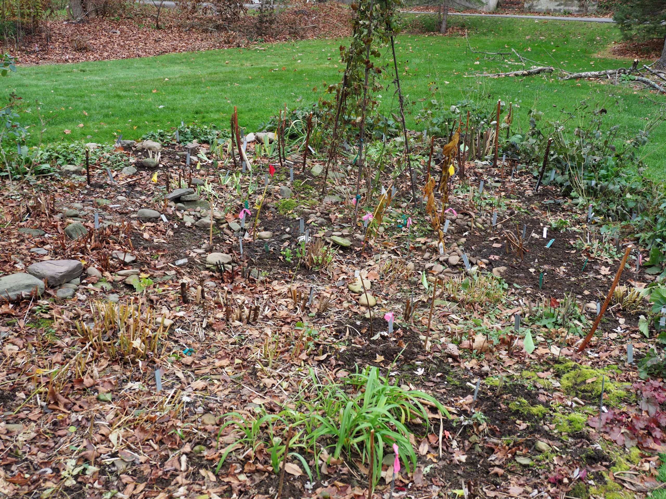 This portion of a perennial island bed has been cleaned of debris and is nearly ready for winter. Once the soil is very cold, or even better, frozen, a winter mulch can be added, but not before.