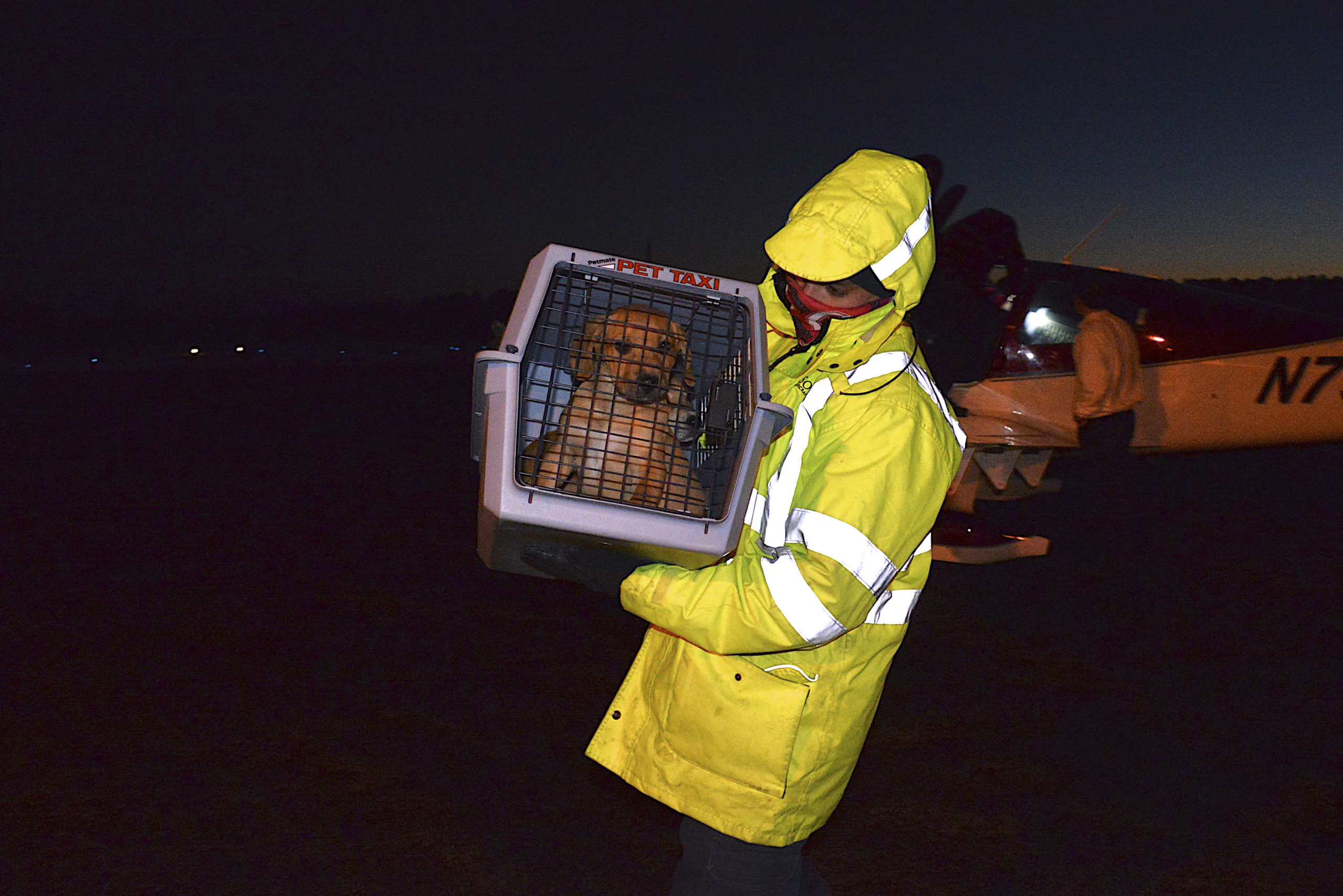ARF is received 15 puppies from its rescue partner in South Carolina on December 18. Local pilot and flight instructor Charles Caravan offered his services and a plane for the transport. KYRIL BROMLEY