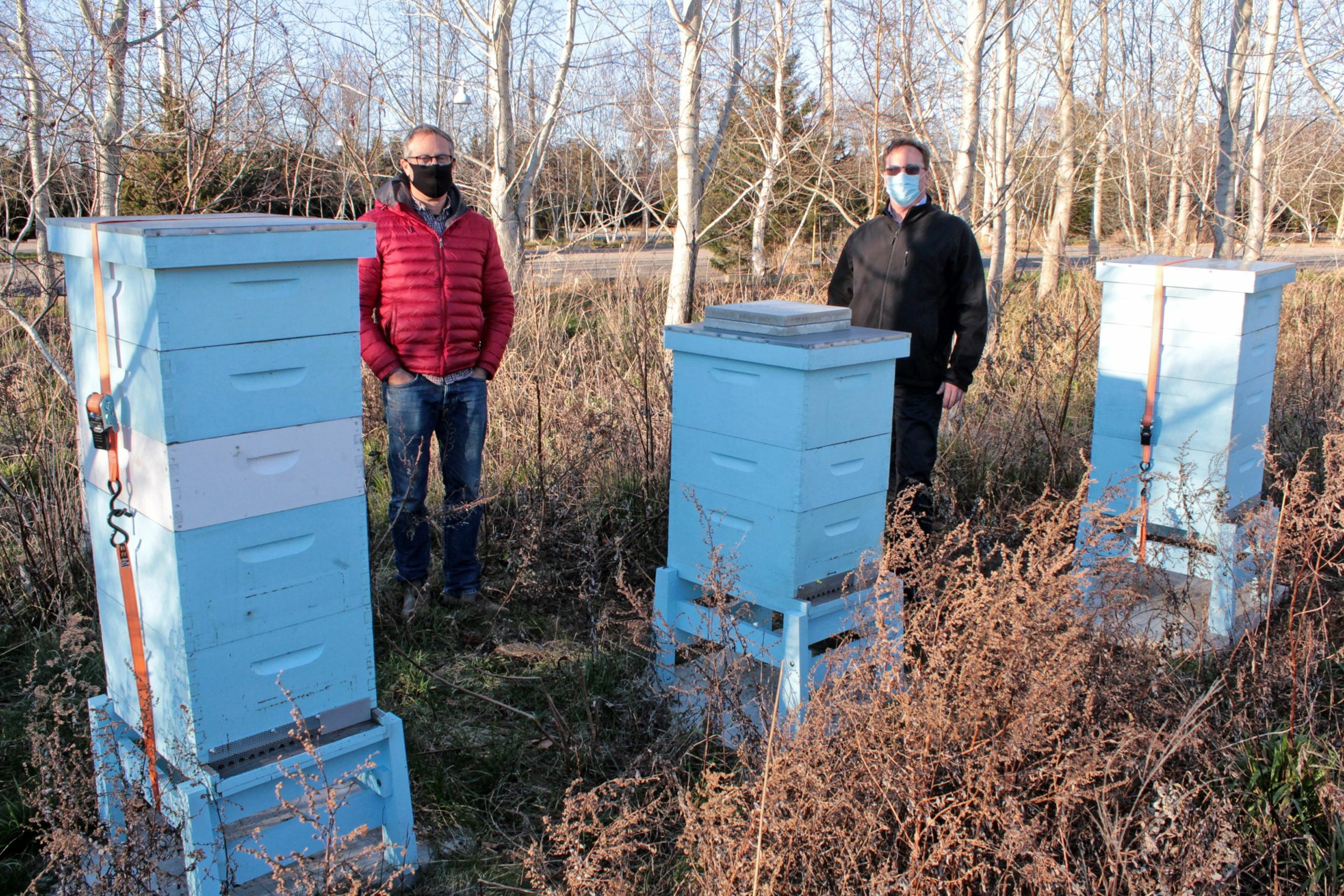 Busy bees at the Parrish Art Museum's hives.