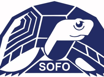 SOFO: Seal Walk at Cupsogue County Park