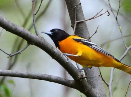 SOFO: Birds of Spring Migration – Spring School Break Outdoor Nature Programs