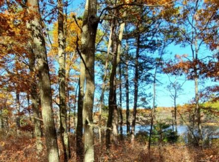 SOFO: Trail Walk to Penny Pond in Southampton (1.6-mile)