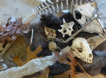 Learn How to Identify Animal Sign – Winter School Recess Programs at the South Fork Natural History Museum