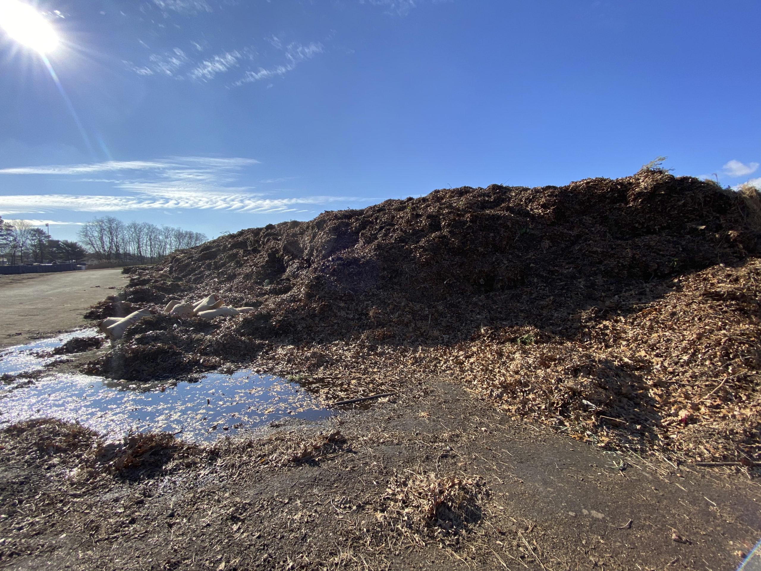 The mulch pile at the Hampton Bays Transfer Station.  DANA SHAW