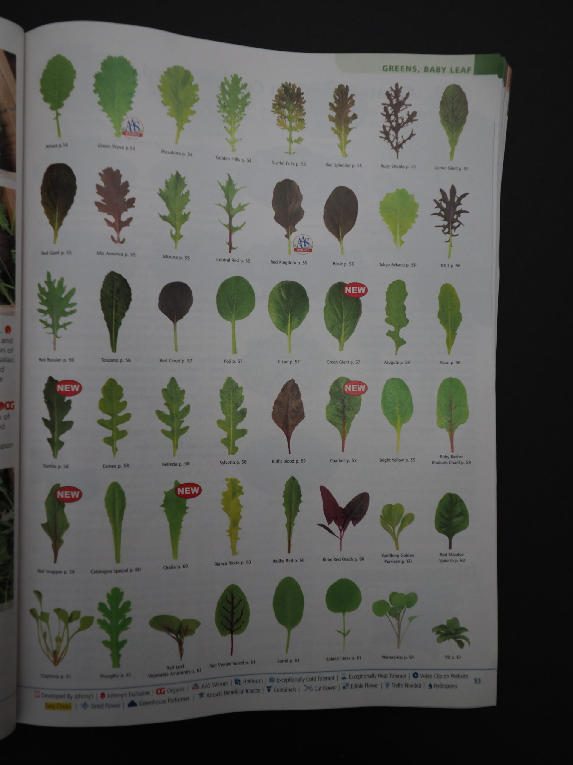 There are dozens and dozens of leafy greens to pick from for your salad garden. On this page, you can see color, shape and texture for nearly 50 varieties and there are many more in the