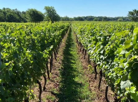 Winemaking on the East End – The Long View