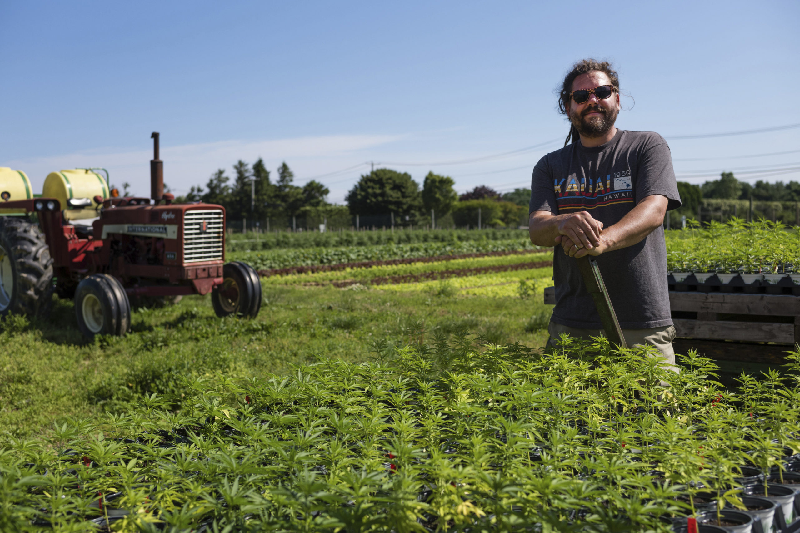 Cannabis sativa grows at David Falkowski's Bridgehampton farm at an undisclosed location in 2019 in Bridgehampton. David Falkowski's Bridgehampton farm, Open Minded Organics (OMO), has a New York State license to grow industrial hemp at an   undisclosed location and process and sell CBD oil as a therapeutic dietary supplement.  LORI HAWKINS