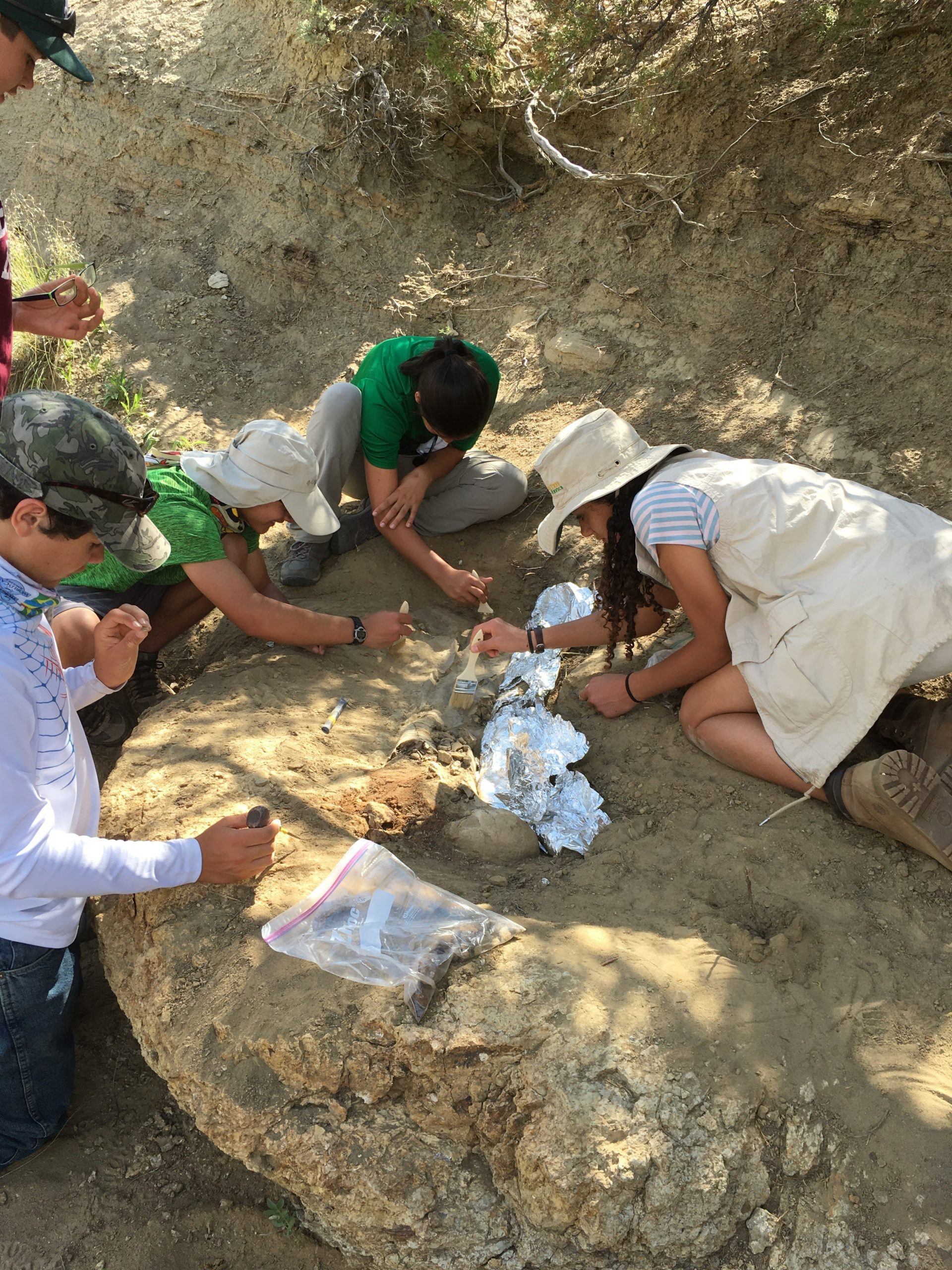 A 2017 group of Westhampton Beach middle and high school students apply a protective layer to the ornithischian dinosaur limb bone found on the grounds of the Zerbst Ranch in Lusk, Wyoming. Courtesy Westhampton Beach Union Free School District