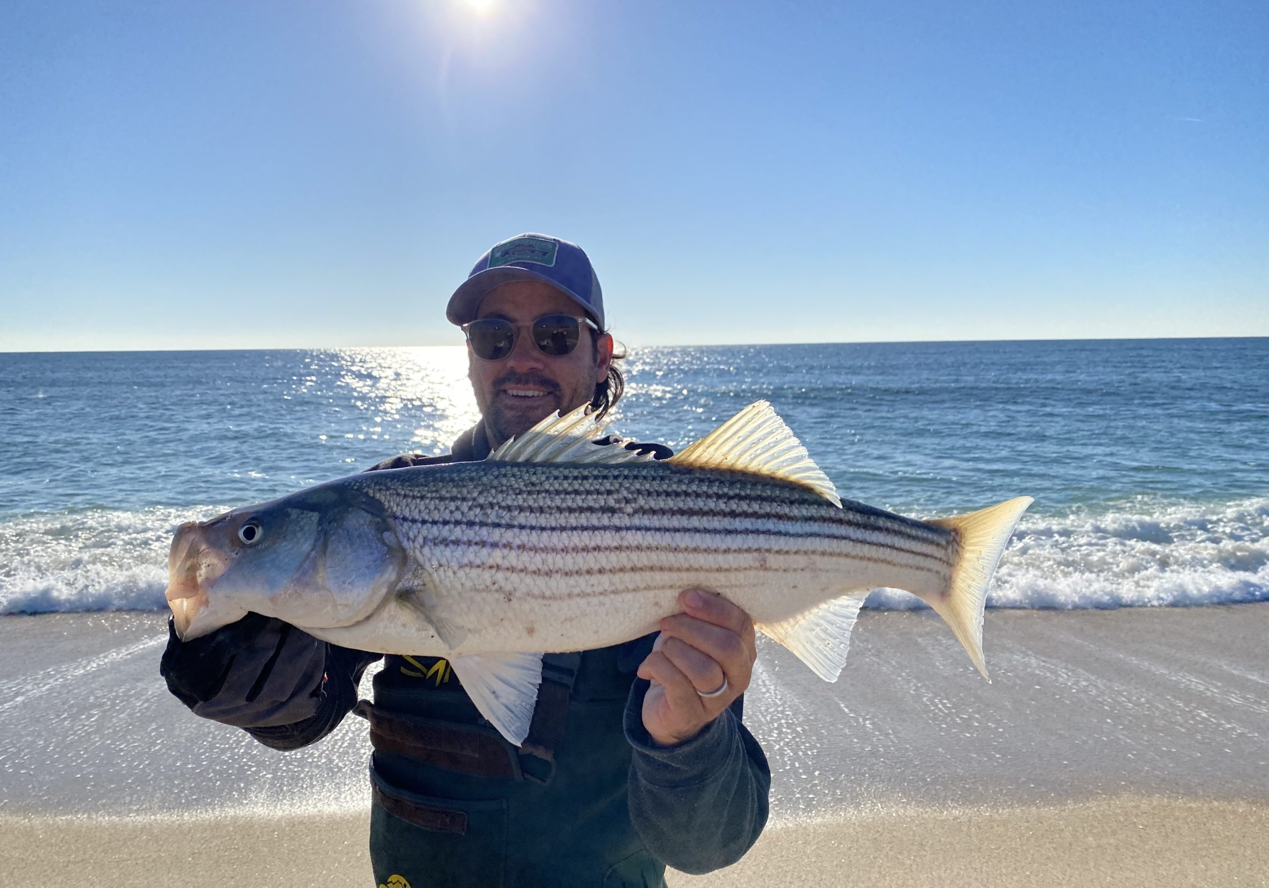 Striped Bass fishermen are being asked to weigh in on the future of striped bass management from now until early April. Pictured is Steve Lobosco of Sag Harbor with one of the late season stripers from local beaches.