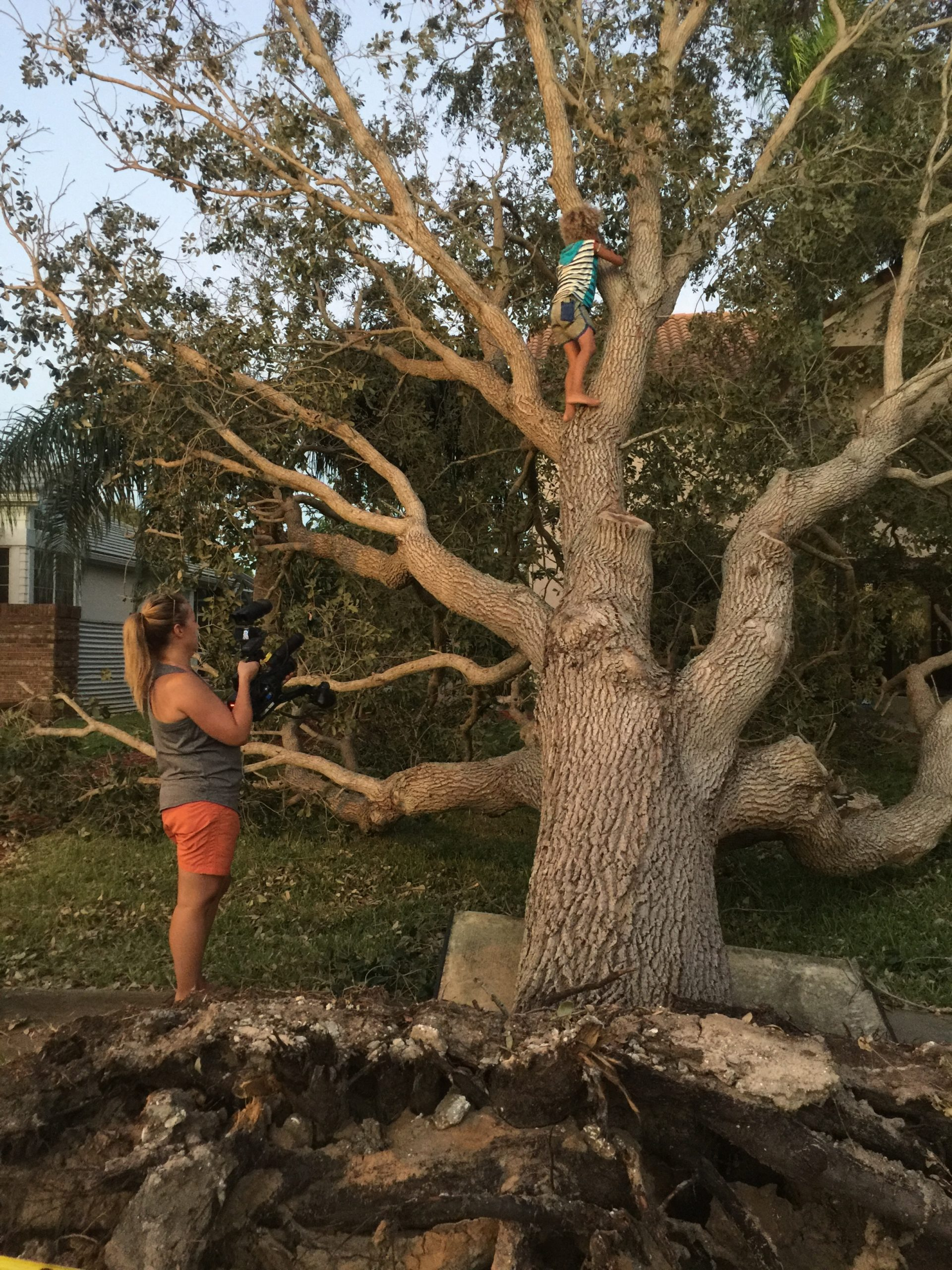 Christi Cooper filming Levi D., a plaintiff in the youth climate change case, in a tree near his Florida home after a storm.