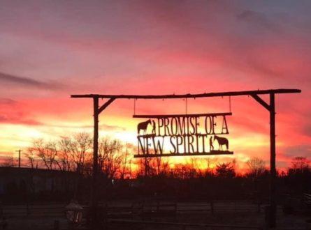 Farmers Market At Spirit's Promise Equine Rescue