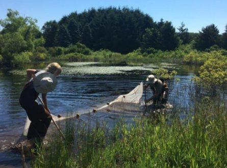 SOFO: Secret Live of the Pond – Hands-on Activity: Children 8+