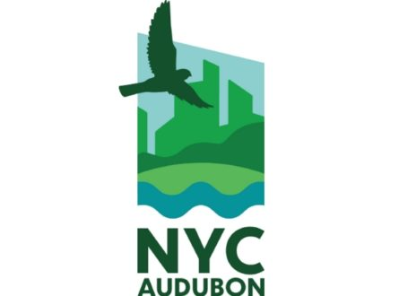 """SOFO: Online Video: New York City Audubon Presents: """"The World of Birds"""" with Aurora Crooks: For ages 11-14"""
