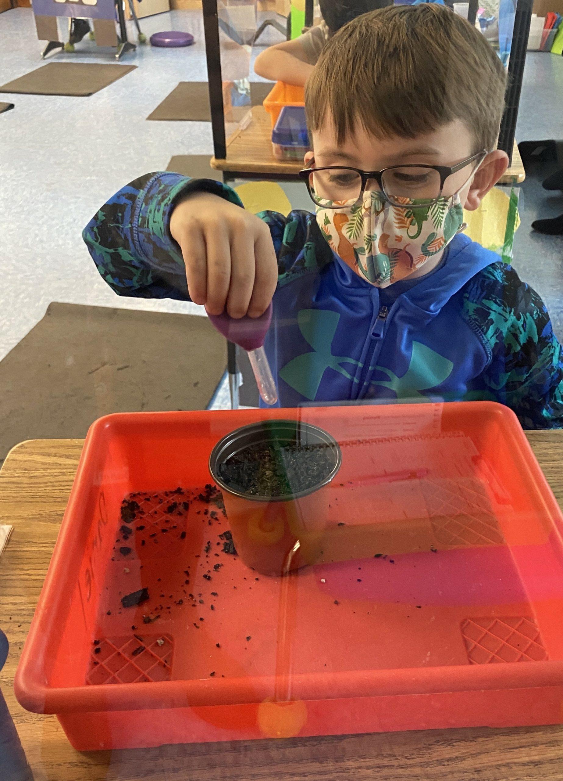 Bridgehampton School kindergarten student Daniel Beyel planted flower seeds.
