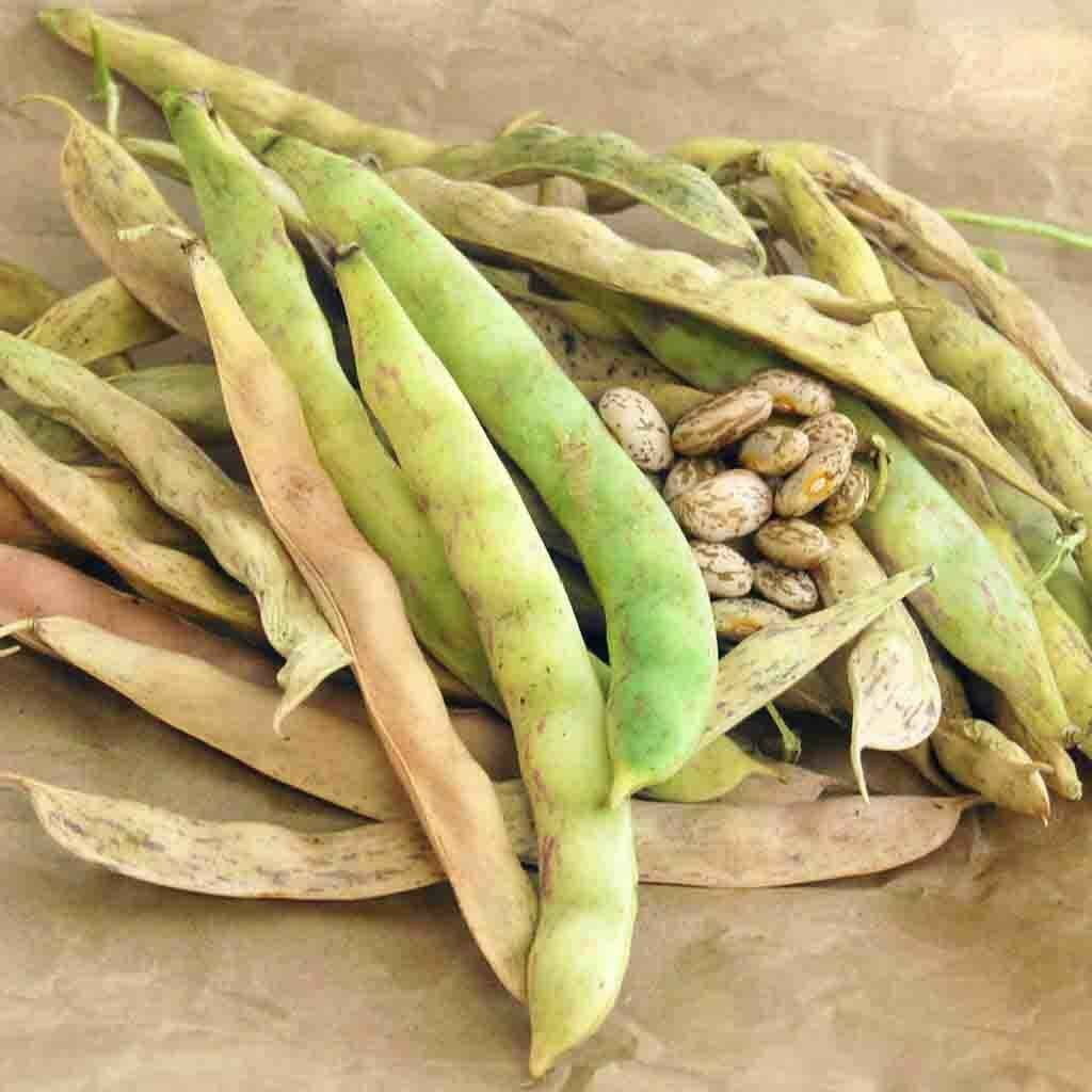 Pinto beans are probably the most popular beans for cooking. They are high in fiber and protein and can be found in refried bean dishes, chilis, soups and stews.