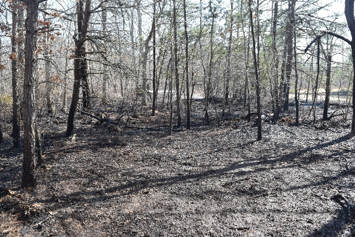 Police are looking for the arsonist who set a fire in the woods in East Quogue.