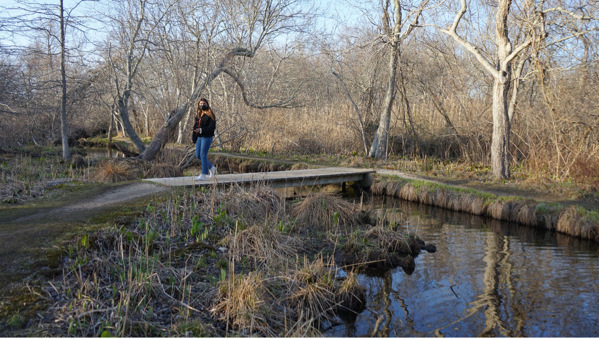 "The David's Lane Duck Pond is one of the stops on ""Full of Noises,"" a self-guided soundwalk."