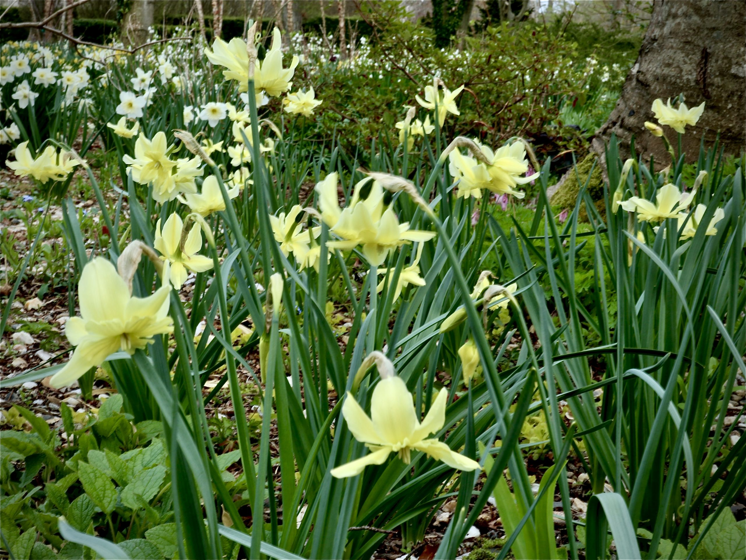 """Narcissus """"Exotic Mystery"""""""