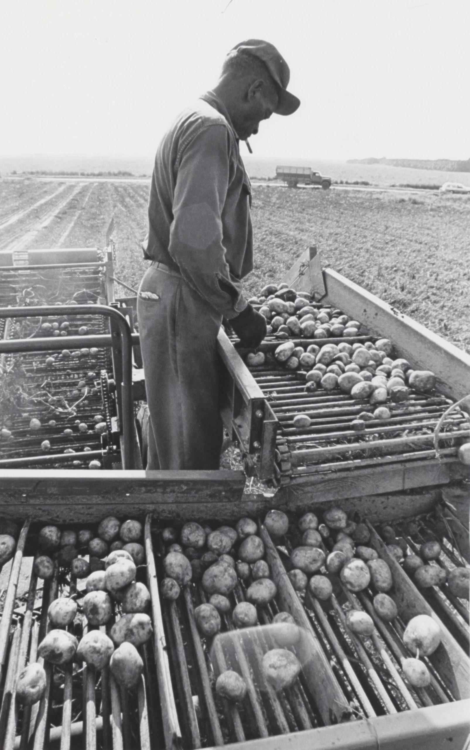 A worker in the South Fork potato fields.