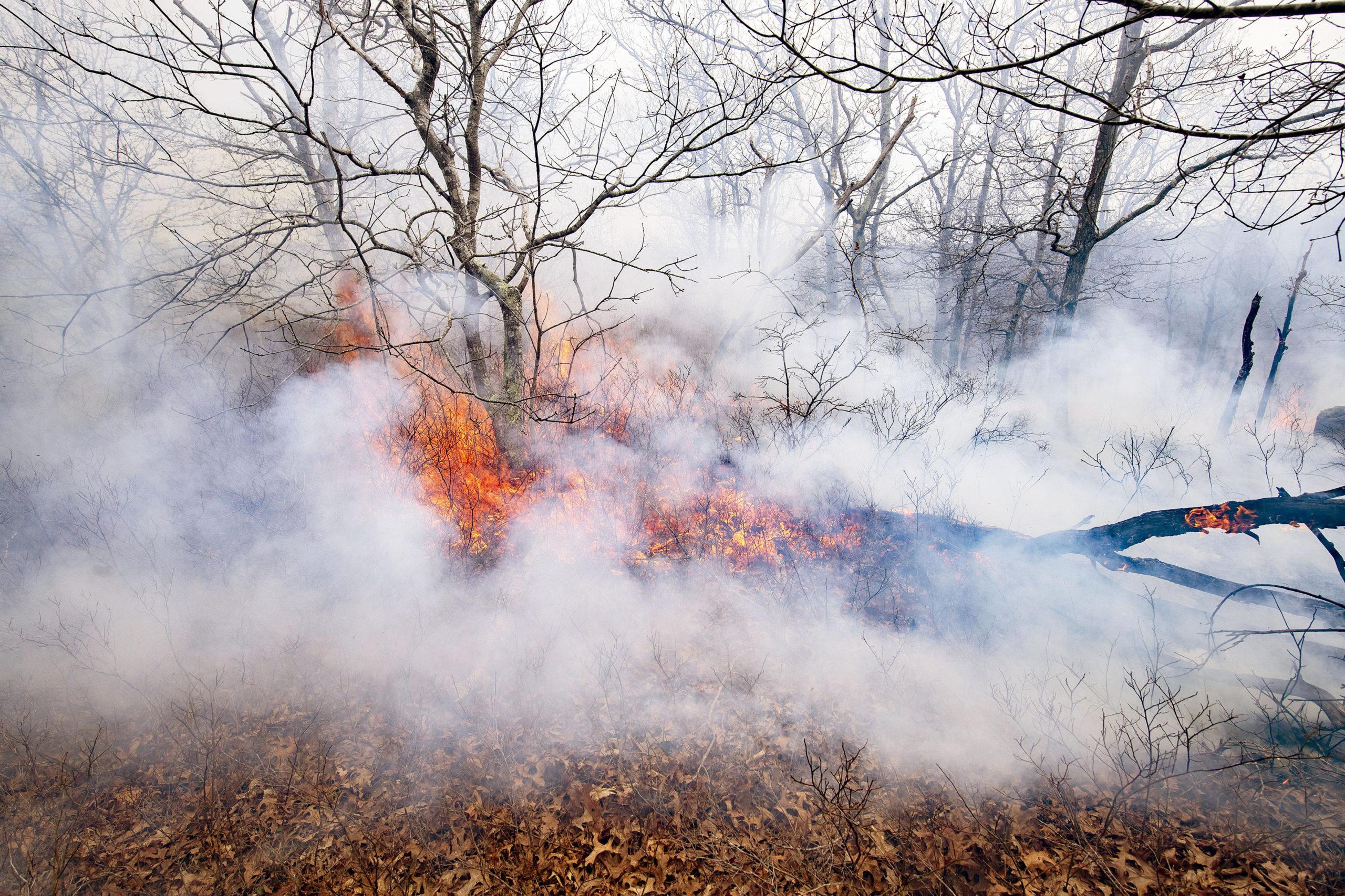 The brush fire in Wainscott Woods.