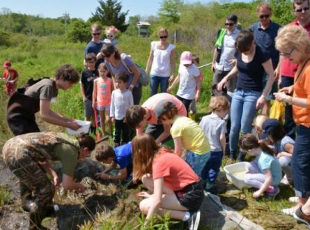 SOFO: Salamander Seining…and Some Frogs Too, with Andy Sabin: All Ages