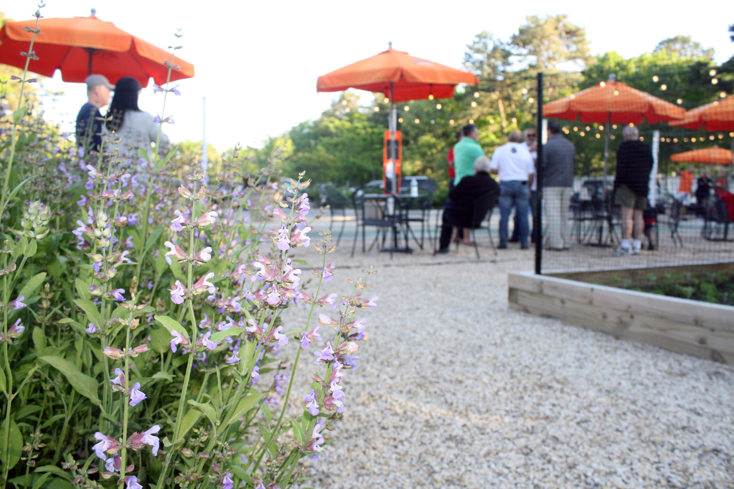 Lavender growing in Centro Trattoria & Bar's new outdoor dining area.