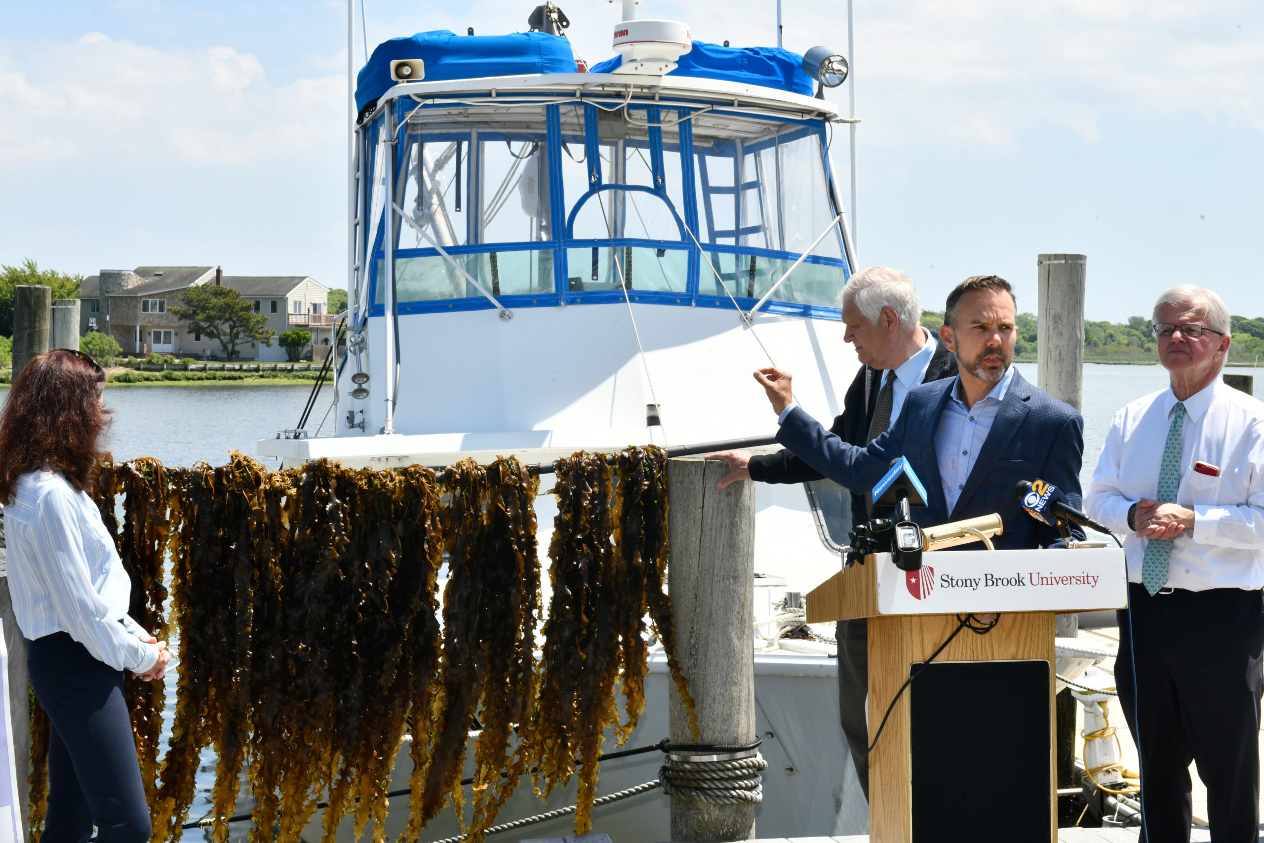 Christopher Gobler, Ph.D, announced May 27, that a species kelp can significantly reduce nitrogen levels in the water.  DANA SHAW