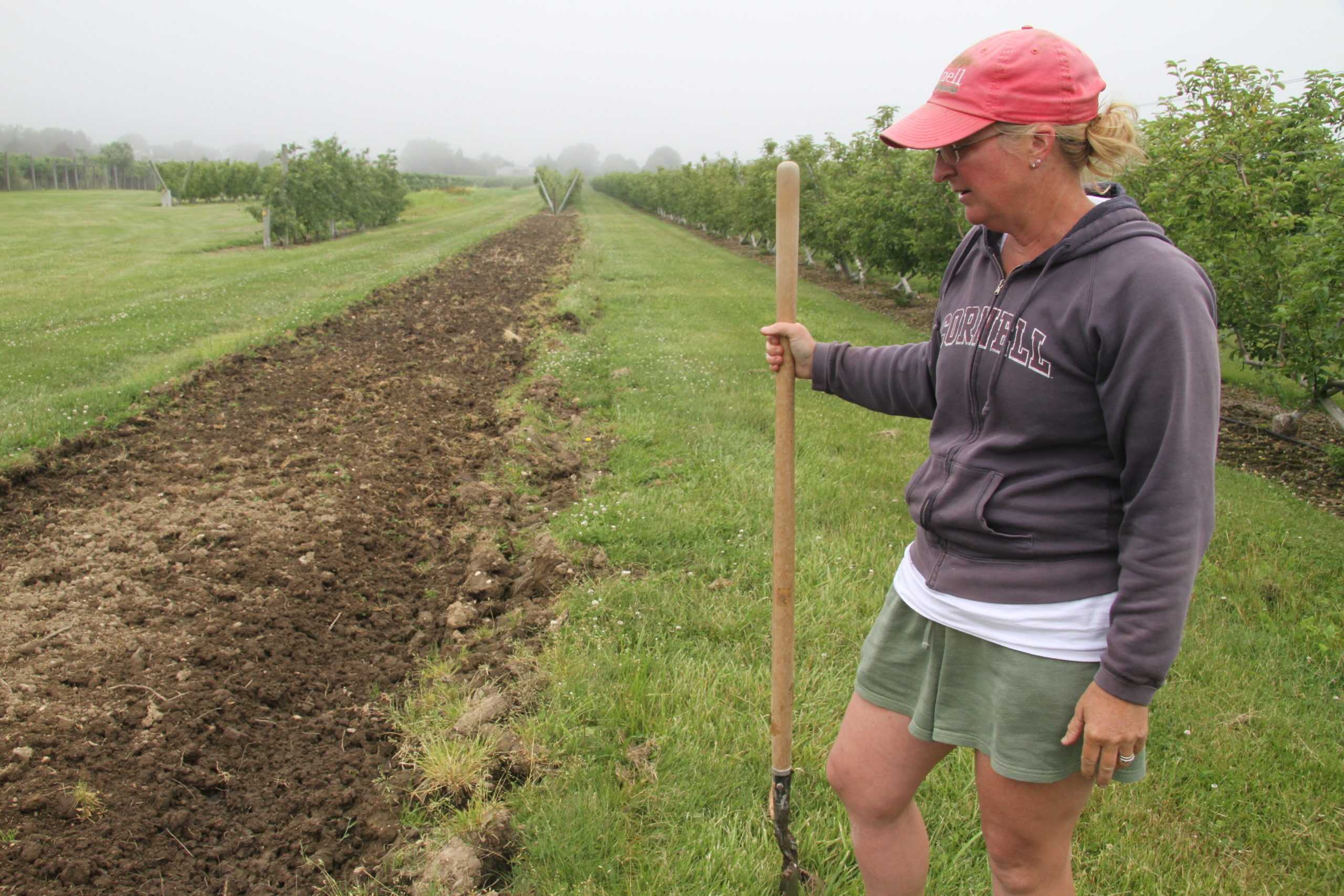 Jennifer Halsey, whose family runs The Milk Pail apple farm lost a row of apple trees that died because the soil they were planted in decades ago is now perpetually saturated from the high water level in Mecox Bay.
