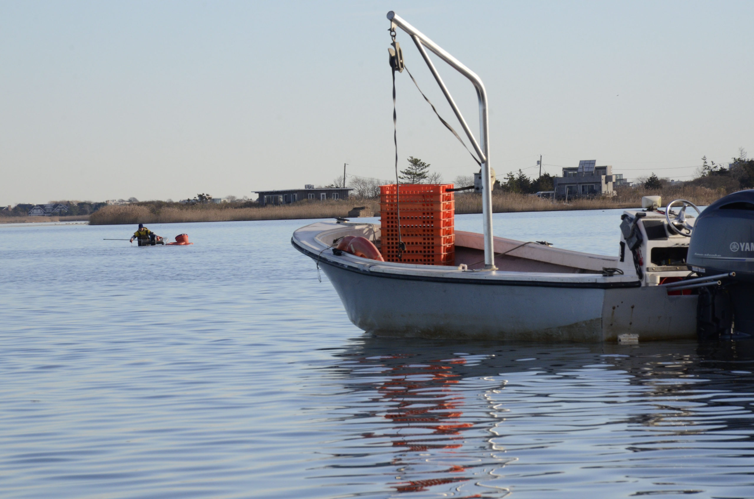 Soft clams and oysters that used to drive a million-dollar fishery in Mecox Bay have died or become worthless because of low salinitiy levels in the bay.