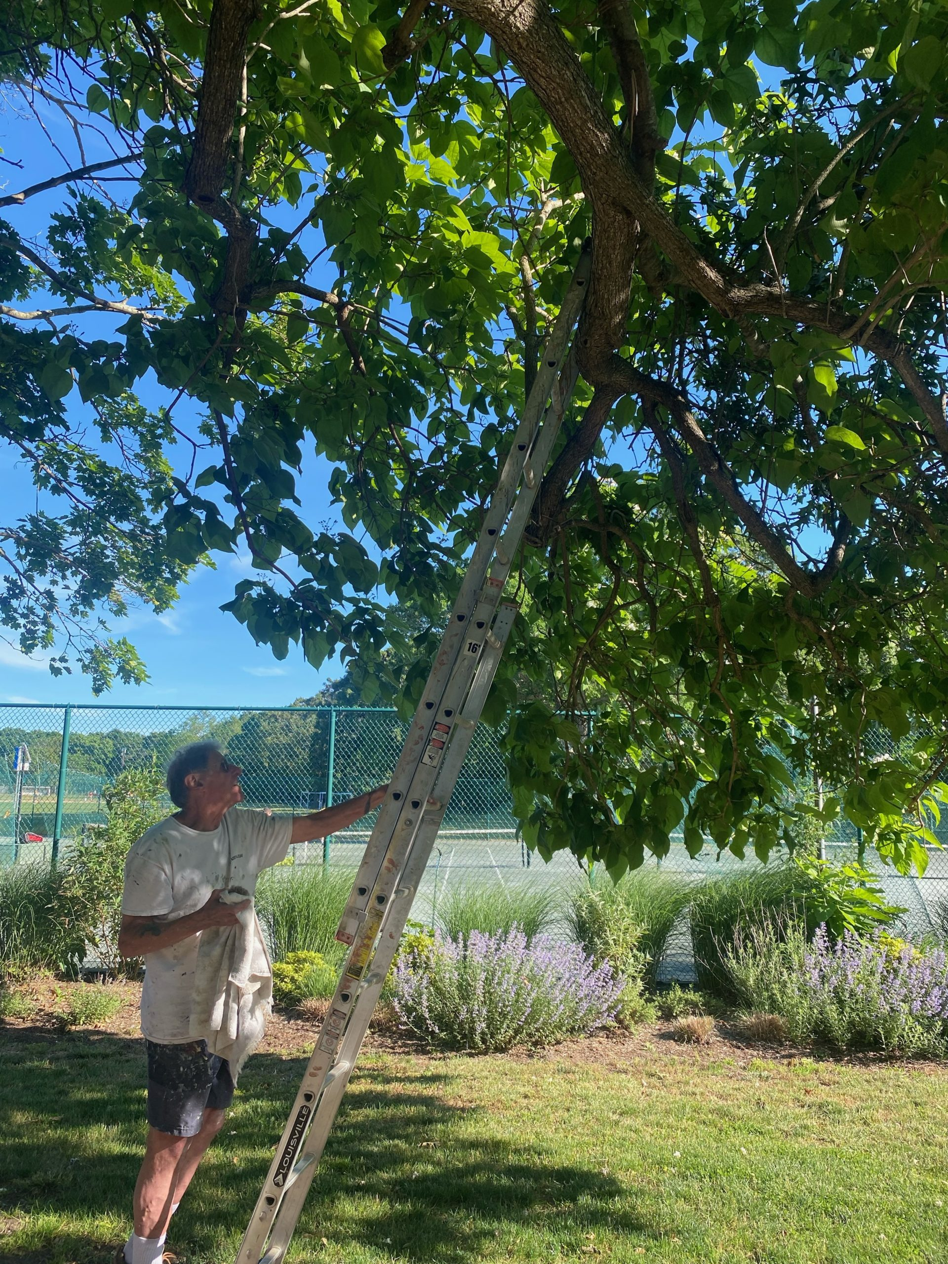 Nick Marzano uses his extension ladder to return the owlet to its tree in Mashashimuet Park. JACKIE HOVING