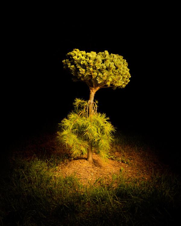 Folly Tree Arboretum. COURTESY TUCKER MARDER