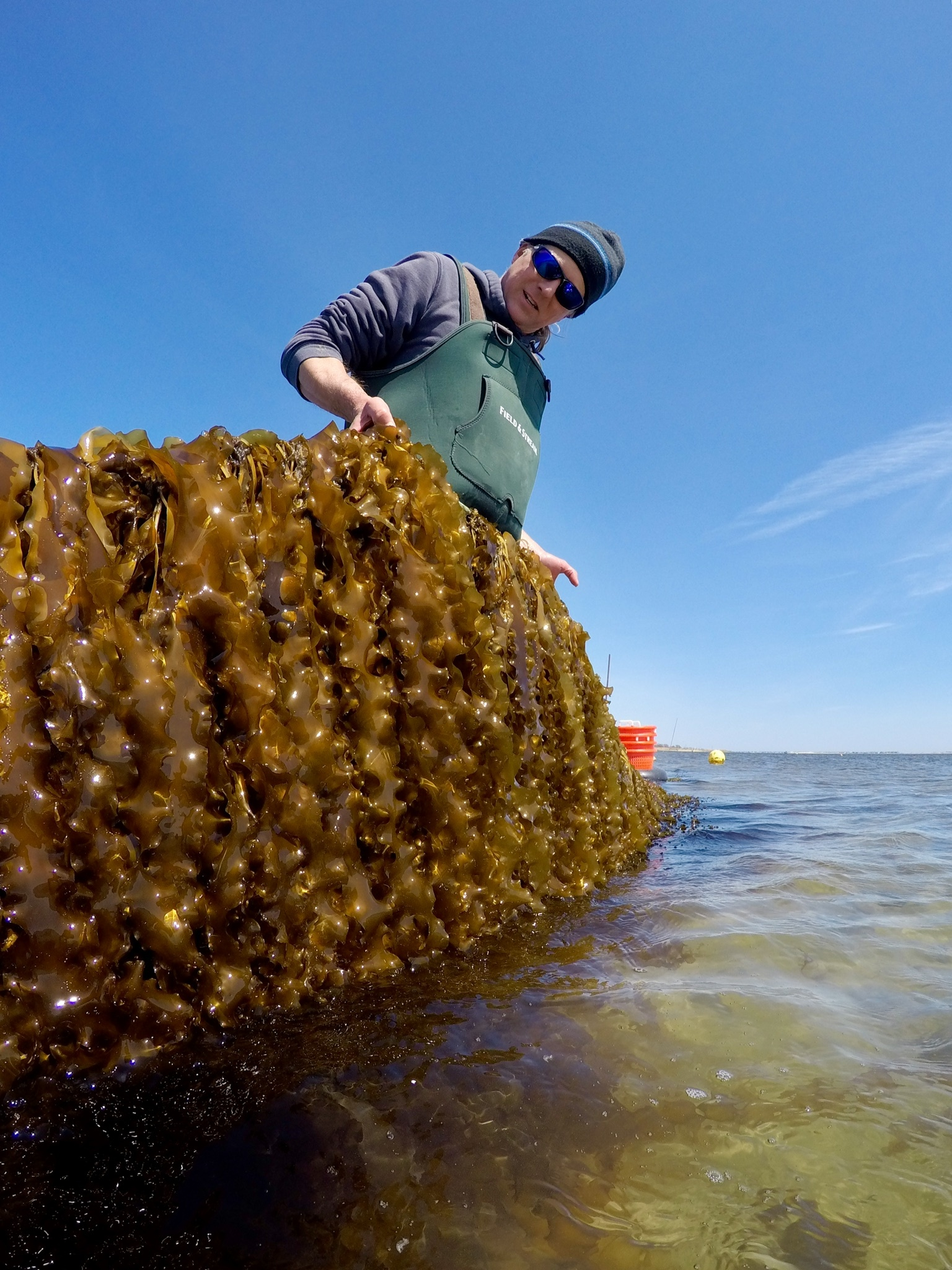 Stony Brook University scientist Michael Doall with the sugar kelp the university's researchers have been growing in Moriches Bay.