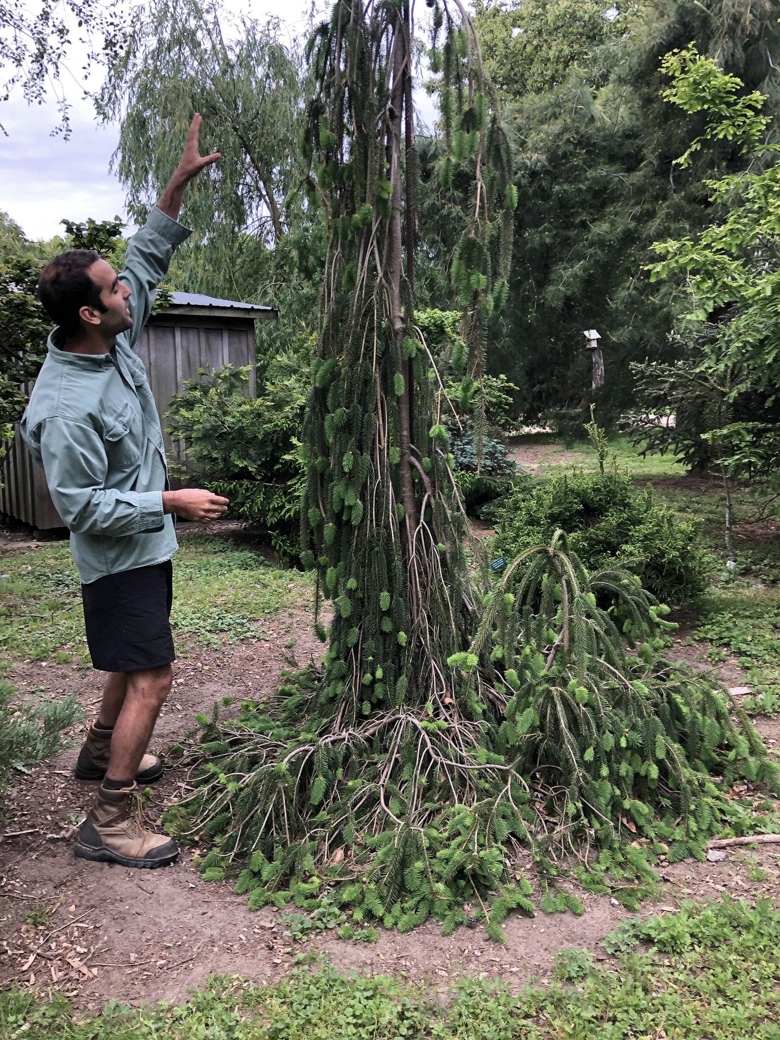 Tucker Marder at the Folly Tree Arboretum.