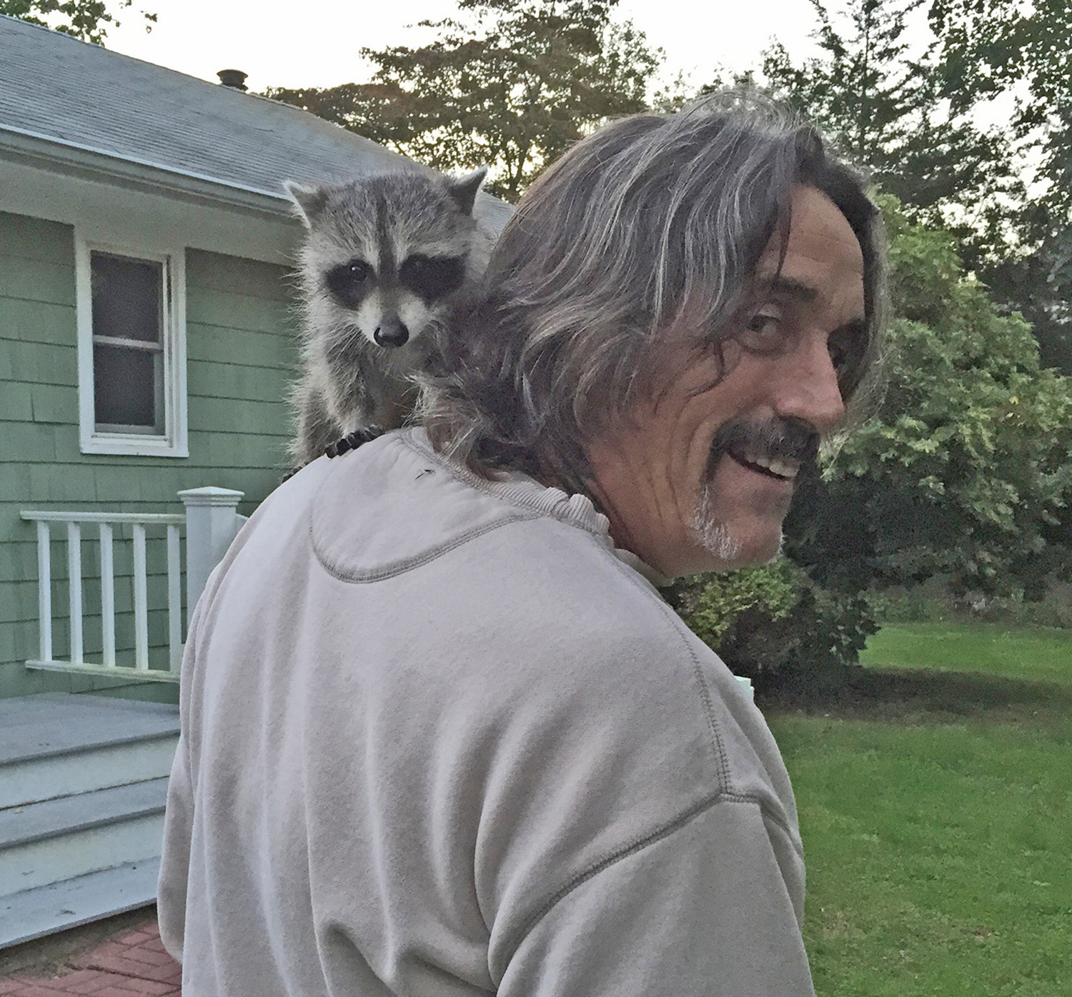 A rescued raccoon hitches a ride on Dell Cullum's shoulder. COURTESY DELL CULLUM