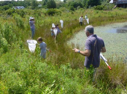 Late Summer Beetles, Bees, & Butterflies of Vineyard Field: All Ages