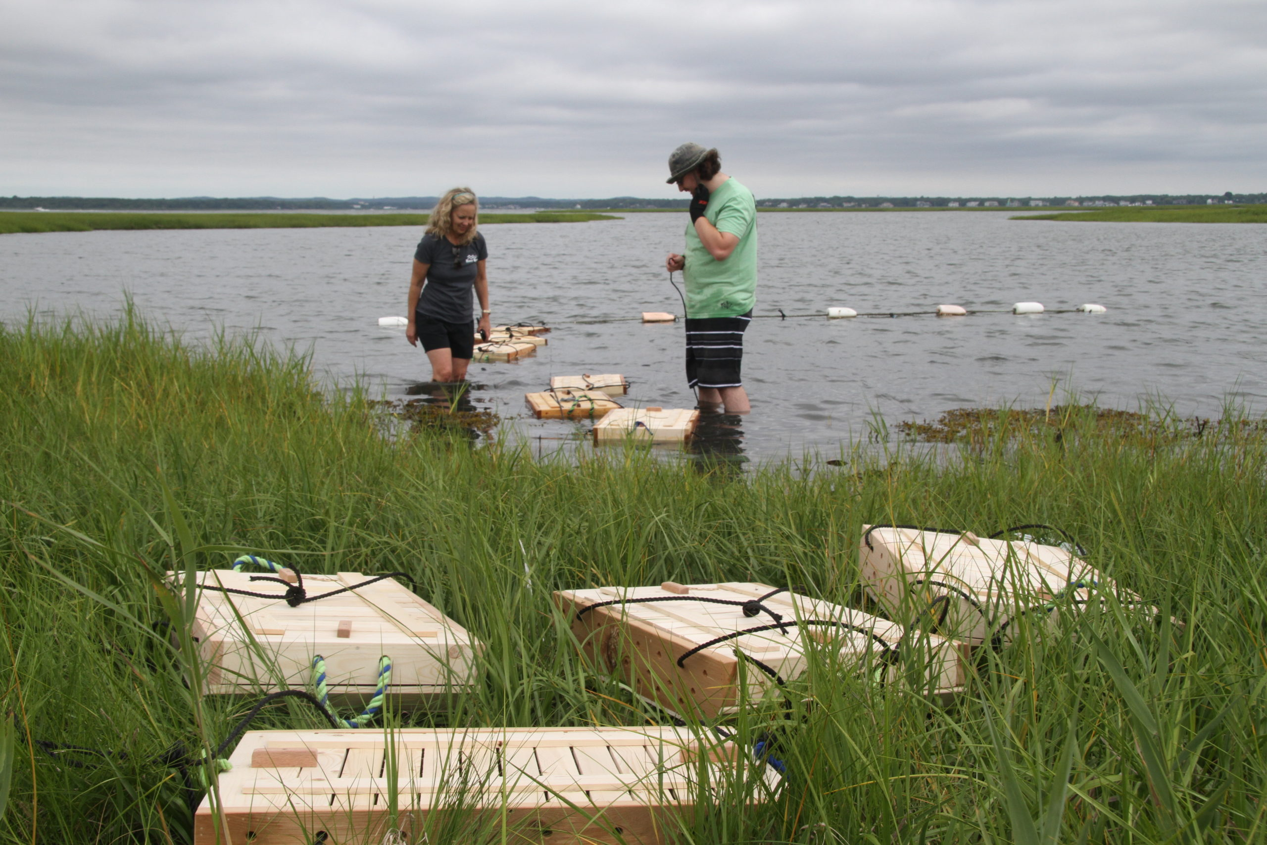 The Moriches Bay Project's oyster garden in West Hampton Dunes.