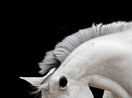 STRAY THE COURSE- BOB TABOR HORSE PORTRAITS