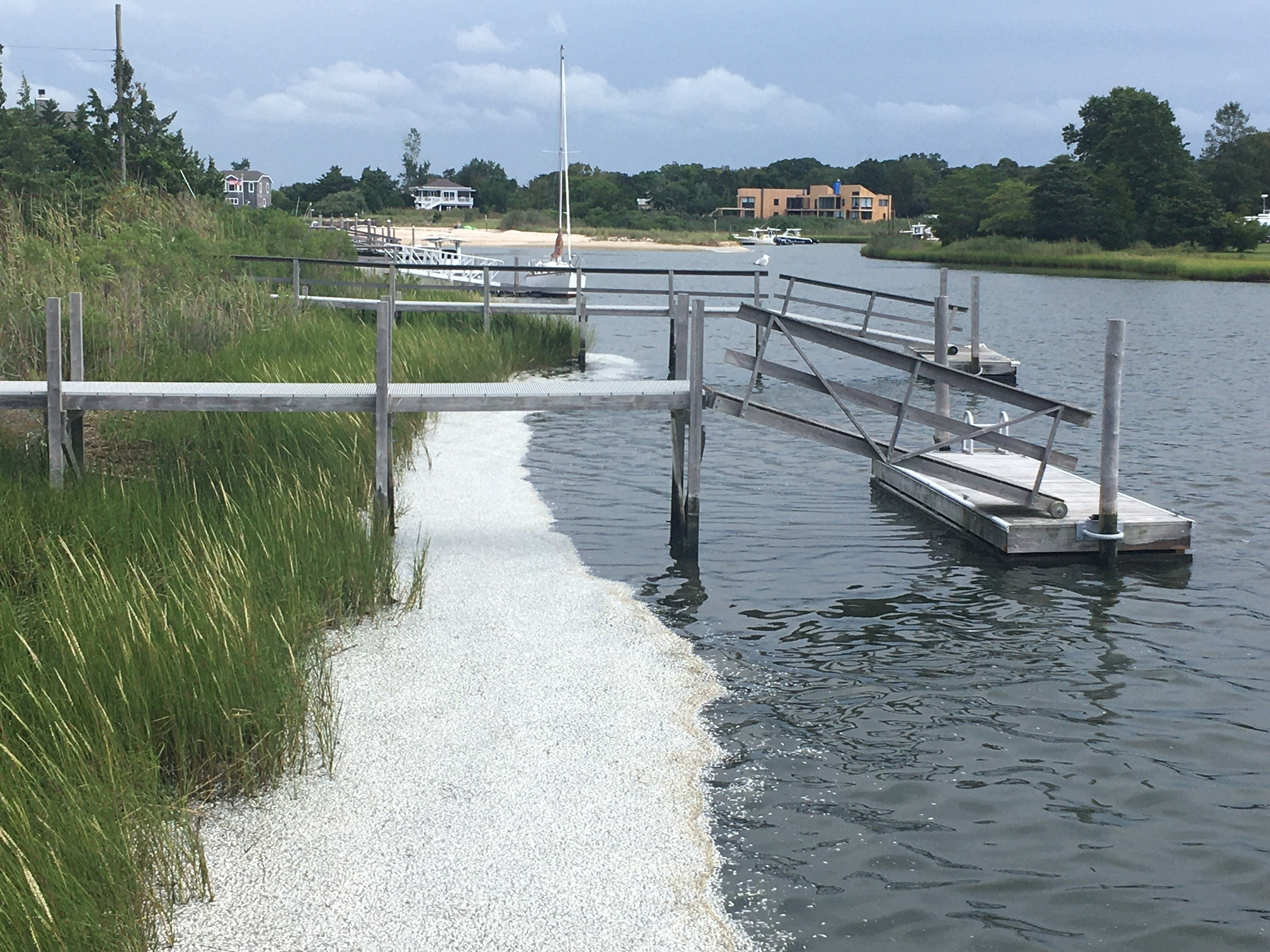Residents of East Bay Drive in North Sea woke up Saturday morning the the sight -- and smell -- of thousands of dead peanut bunker along the shore of Wooley Pond.