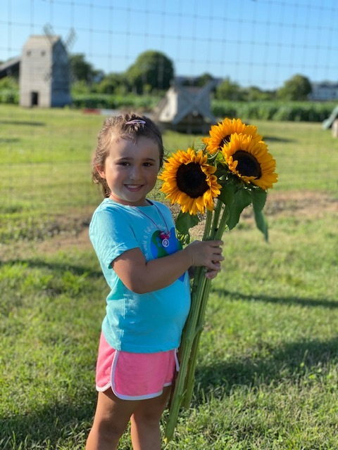 New kindergartener Skylar Kirby gathers the Our Lady of the Hamptons school symbol, sunflowers, as she prepares for the new school year.