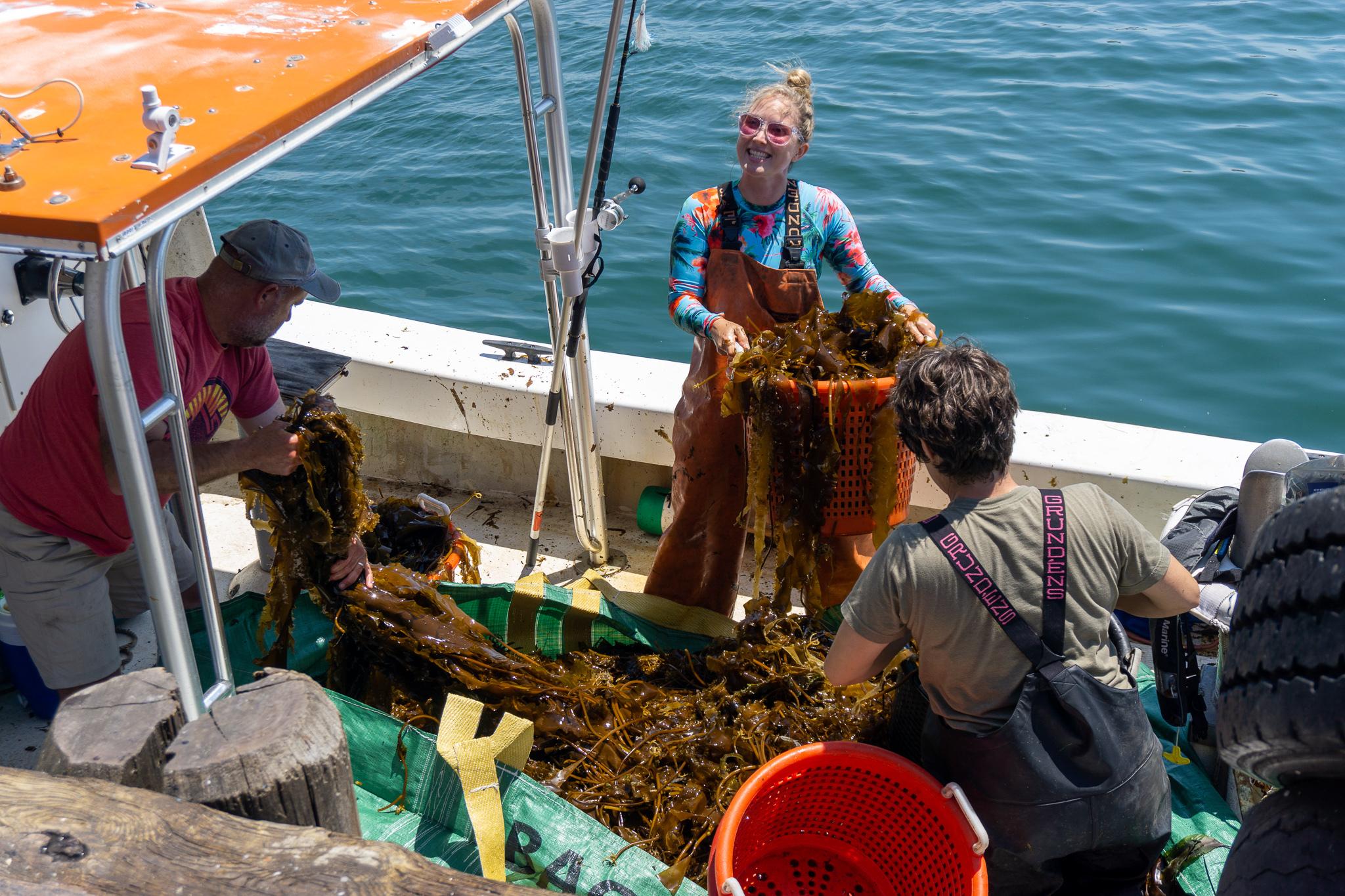 Kelp farmer Elizabeth Ellenwood and co-workers off-loading a fresh haul of sugar kelp to make fertilizer for the Montauk Seaweed Supply Company.