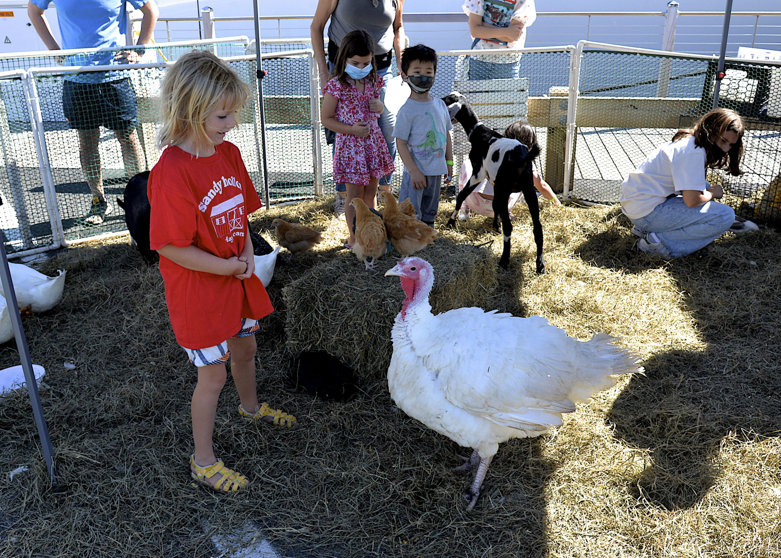The petting zoo at HarborFest.  KYRIL BROMLEY