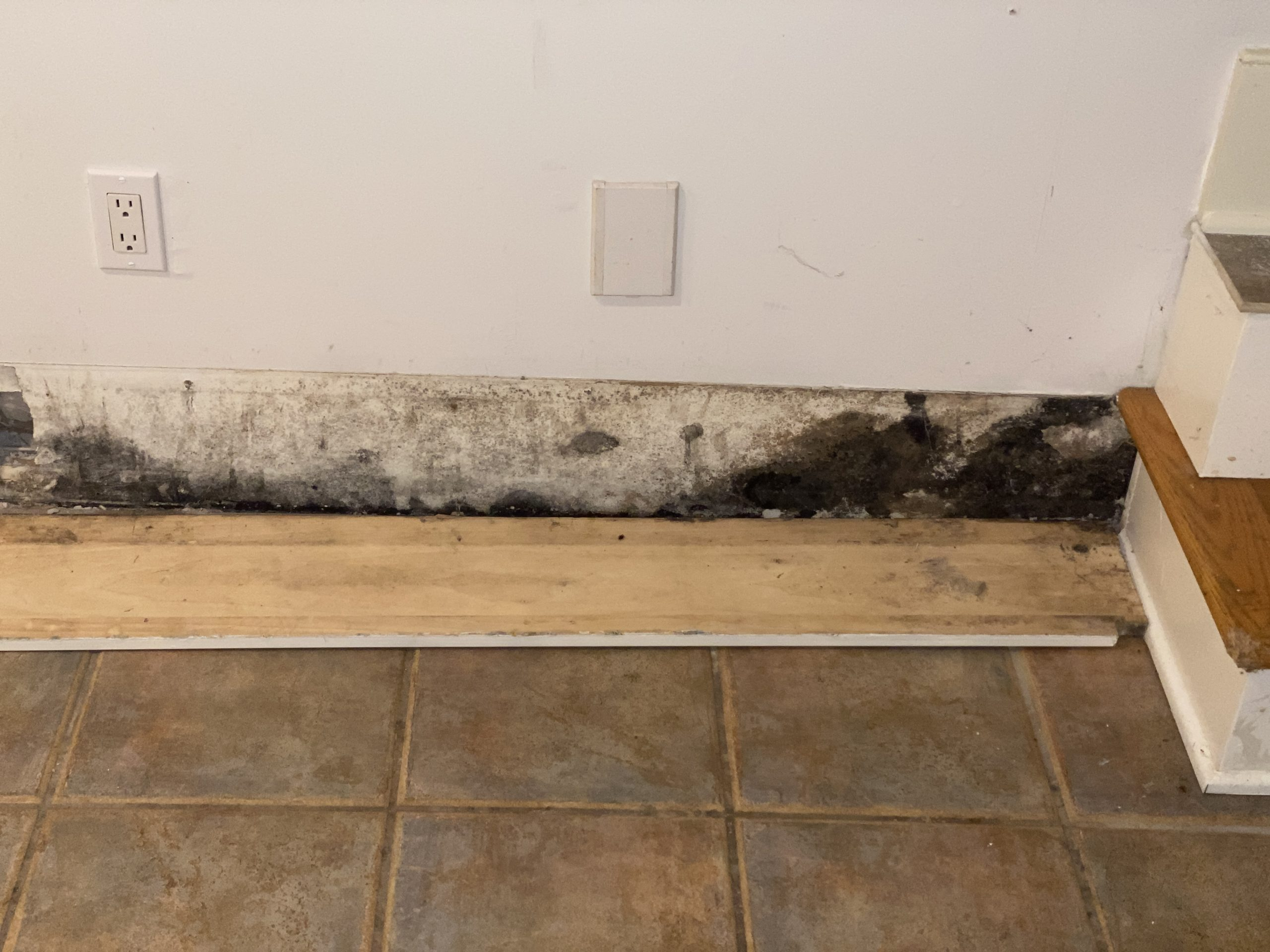 The common denominator in any mold infestation is moisture, according to Brad C. Slack, the founder of Mold Pro, Inc.