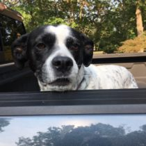 Suffolk County lawmakers want to make sure pets in open vehicle areas are restrained.