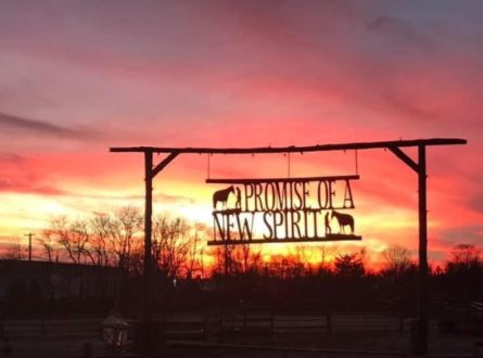 North Fork Country Halloween Barn Dance At Spirit's Promise Rescue