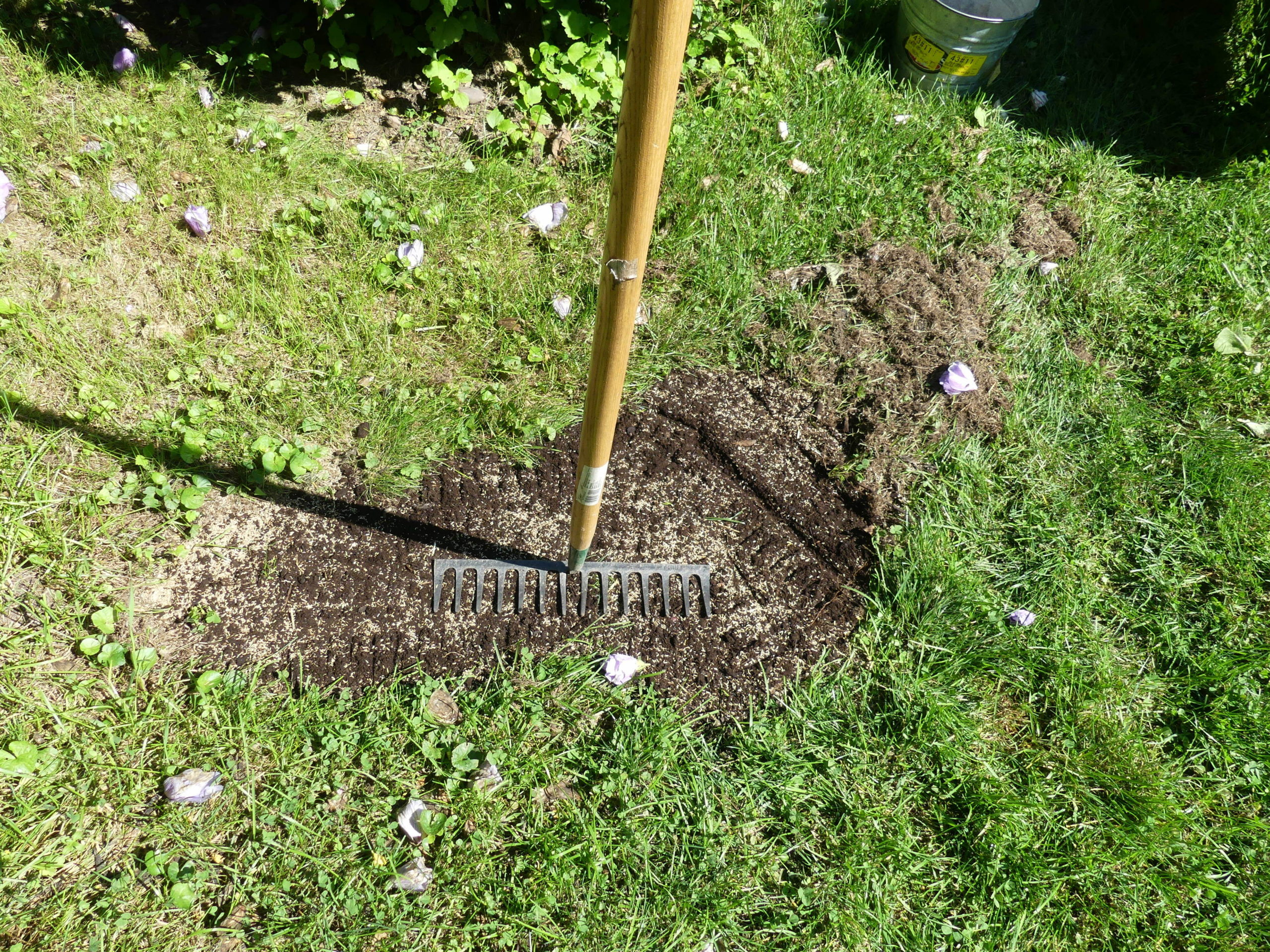 Once seeded the flat side of the tine rake is used to gently tamp the seed bed.